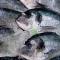 Pește și fructe de mare pentru o minte sănătoasă într-un corp sănătos