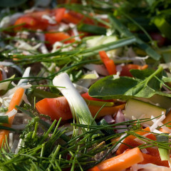 Pateu de legume (de la 1 an)