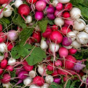 Ridichile – un concentrat de vitamine pentru copii