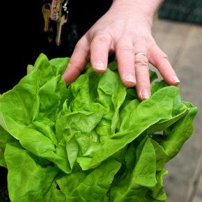 salata europeană
