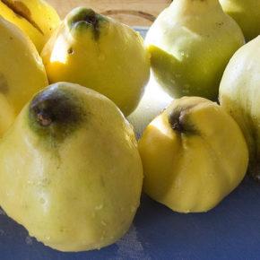 Gutuie sau fructul Afroditei