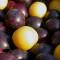 Corcoduşe, fructe ale copilăriei ce întăresc sistemul imunitar