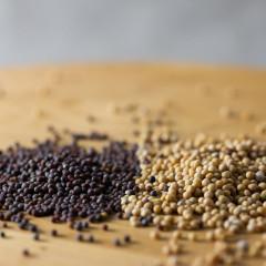 Semințe de muștar, condiment și remediu