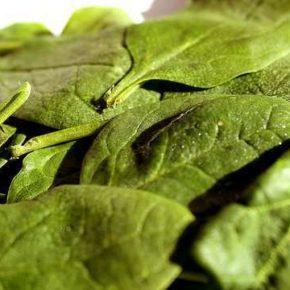 Salată de spanac (de la 1 an)