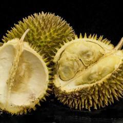 Durian, fructul aromat și respingător deopotrivă