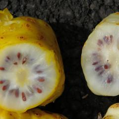 Noni, un fruct exotic cu proprietăți vindecătoare