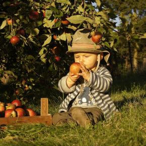 Meniu lacto-vegetarian pentru copii peste 1 an