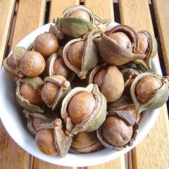Nuci de macadamia sau minuni australiene