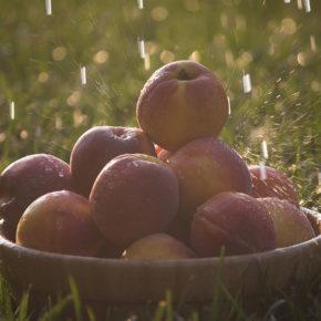 Fructe la cuptor (de la 1 an)