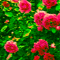Trandafirul de Dulceaţă