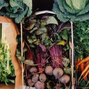 Ce legume consumăm în sezonul rece?