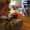 Ardei umpluti cu mei și legume (de la 1 an)
