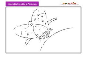 Musculita Ceratitis si portocala