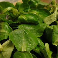 Salată de câmp, salata mielului sau fetică