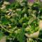 7 plante uimitoare care vestesc primăvara