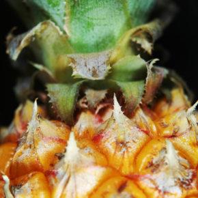 Ananasul – fructul mai bătrân decât Moș Crăciun