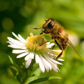 Miere de albine, un aliment benefic sau periculos pentru copii?